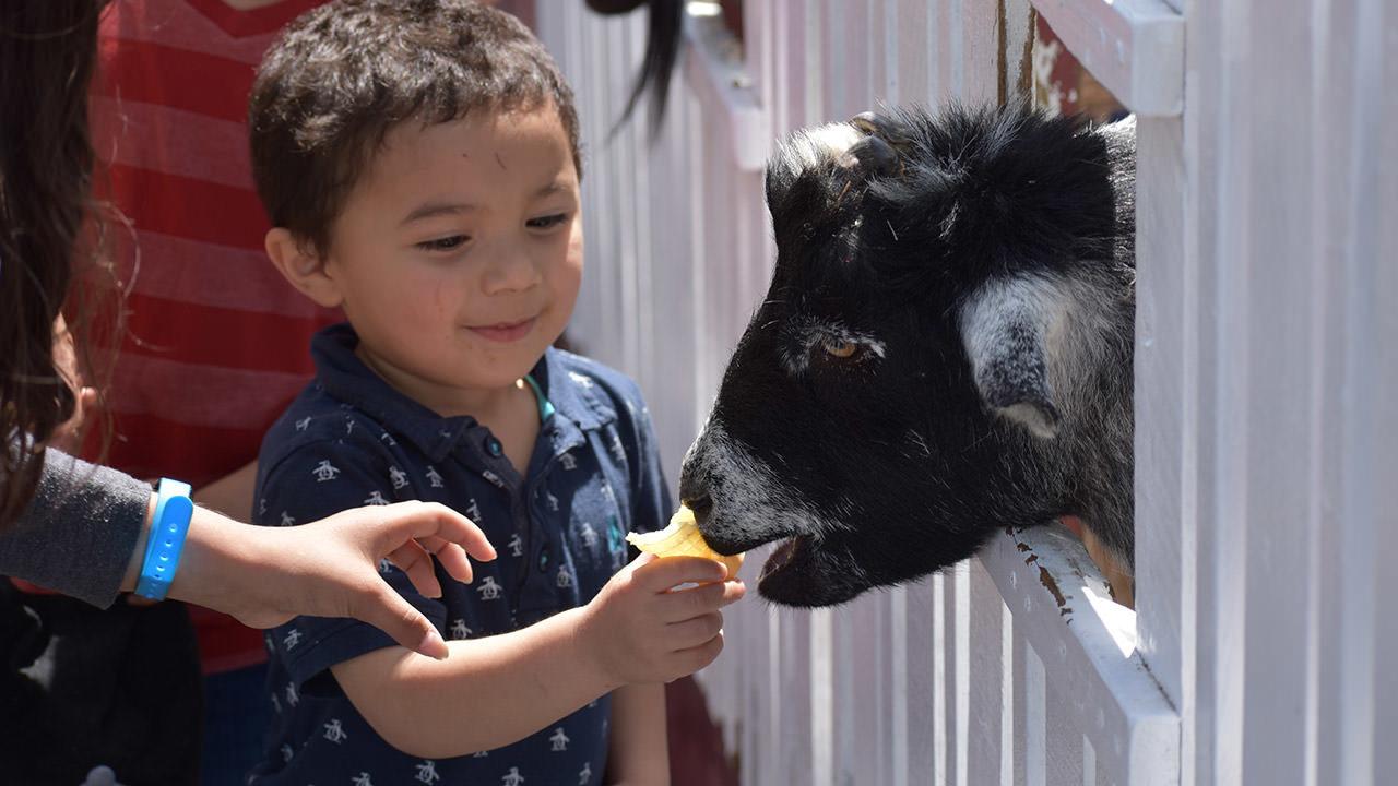 Adventure City Petting Farm